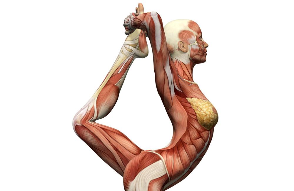 Corso di Anatomia di un Massaggio - Prosperae®